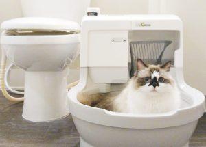 Lettiere autopulenti, la novità per chi ama i gatti