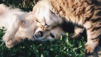 Comportamento felino: ecco come micio manifesta affetto