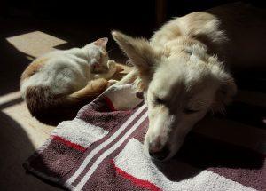 Gatto comportamento: diverso da quello dei cani, ecco perché