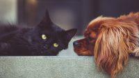 Paragonare un gatto ad un cane è impossibile. Ecco perché non farlo