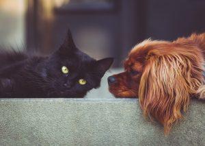 Paragonare un gatto ad un cane è impossibile