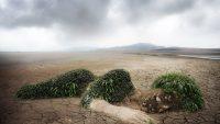 Diritto ambientale: cos'è e come si applica