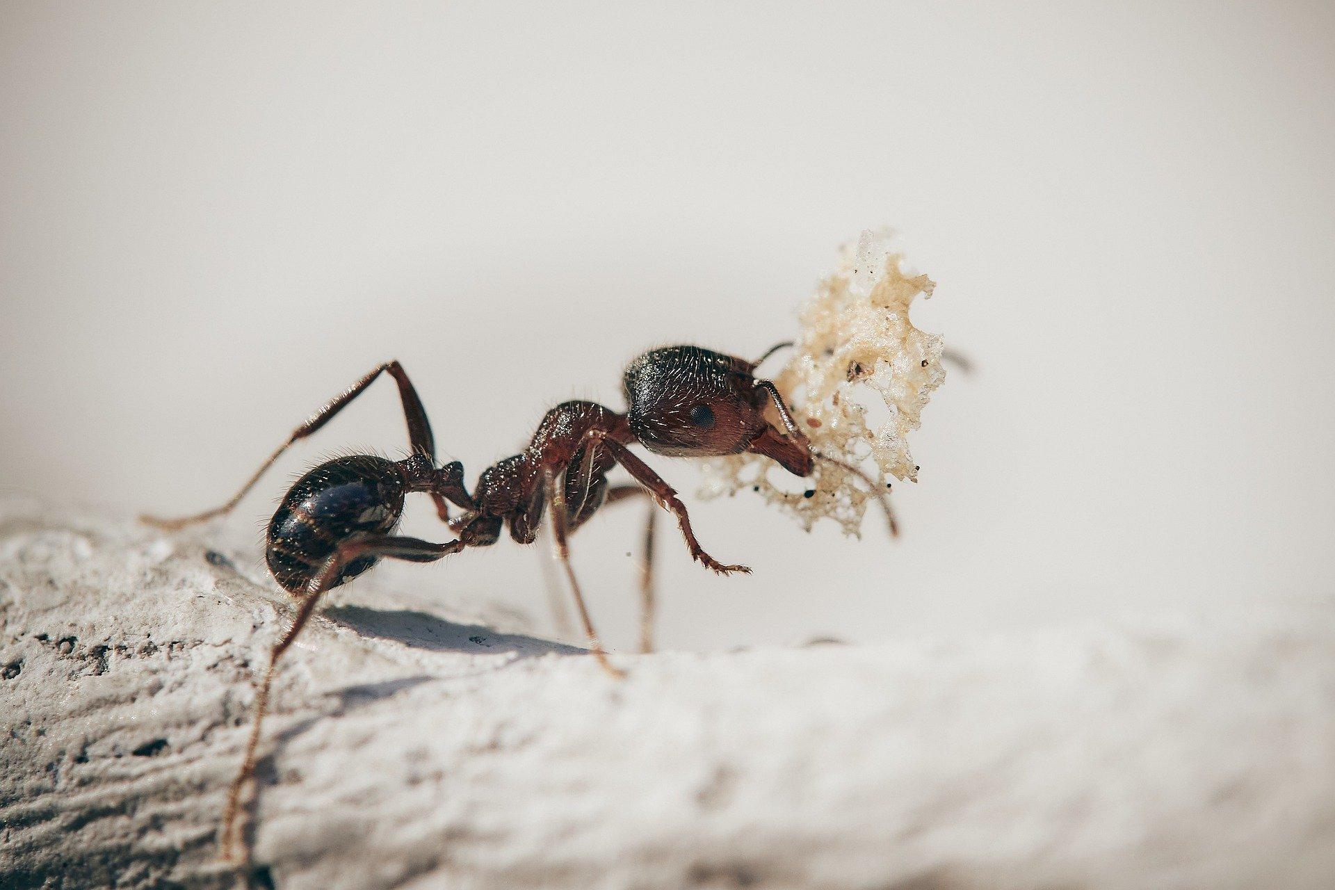 Infestazione di formiche: quali sono i segnali e i rimedi?